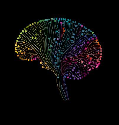 Tips på föreläsare om hjärnan - stress, arbetsglädje, bemötande och neuroledarskap.